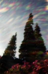Pinhole Photography by Karen Edmundson Bean : Sun flare and Firs