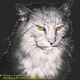 Essence of Barn Cat