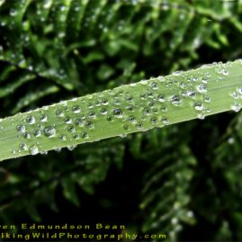 Grass Post Rain digital photo