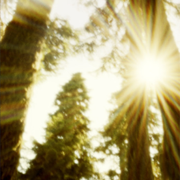 Trees On Cougar pinhole