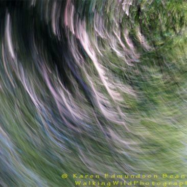 Spring Swirl