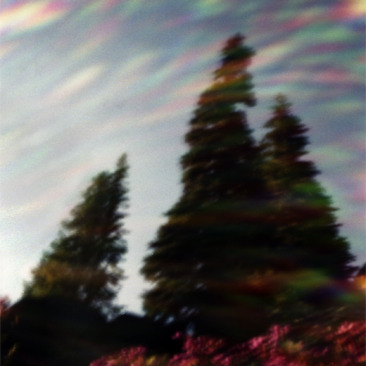 Trees With Flair pinhole